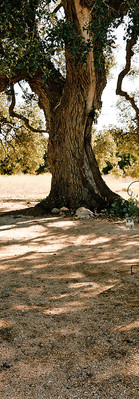 Get married outside under our Cascade Oak Tree: The Alexander at Creek Road in Dripping Springs
