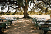 Get married under our Cascade Oak Tree: The Alexander at Creek Road in Dripping Springs