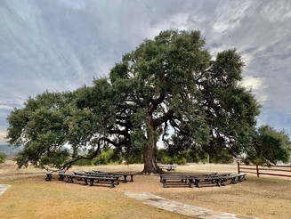 Cascade Oak, with bench seating for 200 guestsessica Chandler Photography at The Alexander at Creek Road in Dripping Springs