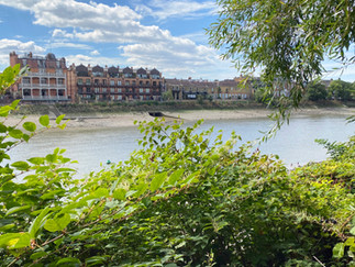 Back on the towpath with Barnes & Mortlake across the river