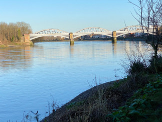 Looking downstream at Barnes Bridge