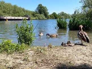 The Thames at Reading