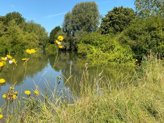The river near Moreton