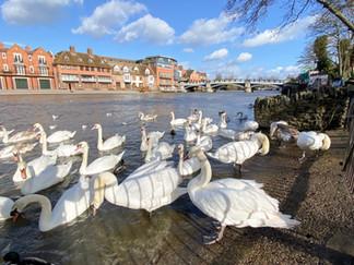 Riverside at Windsor
