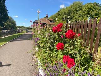 Beautifully maintained garden