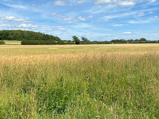 1.5 miles to go now, through lovely open fields