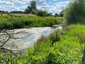 The river near Latton