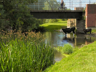 Bridge carrying disused railway line across the river
