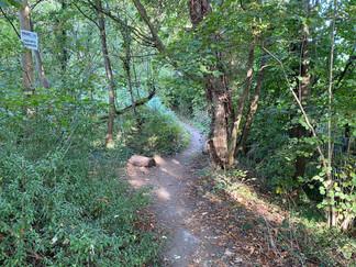 Walking through the wood