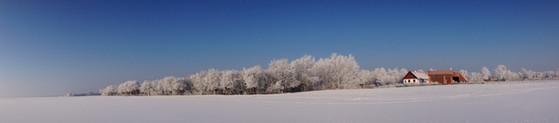 Hoary frost