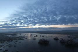 Frozen twilight
