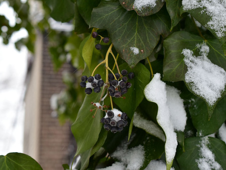 Does Winter Wear You Down? Here's How I Can Help