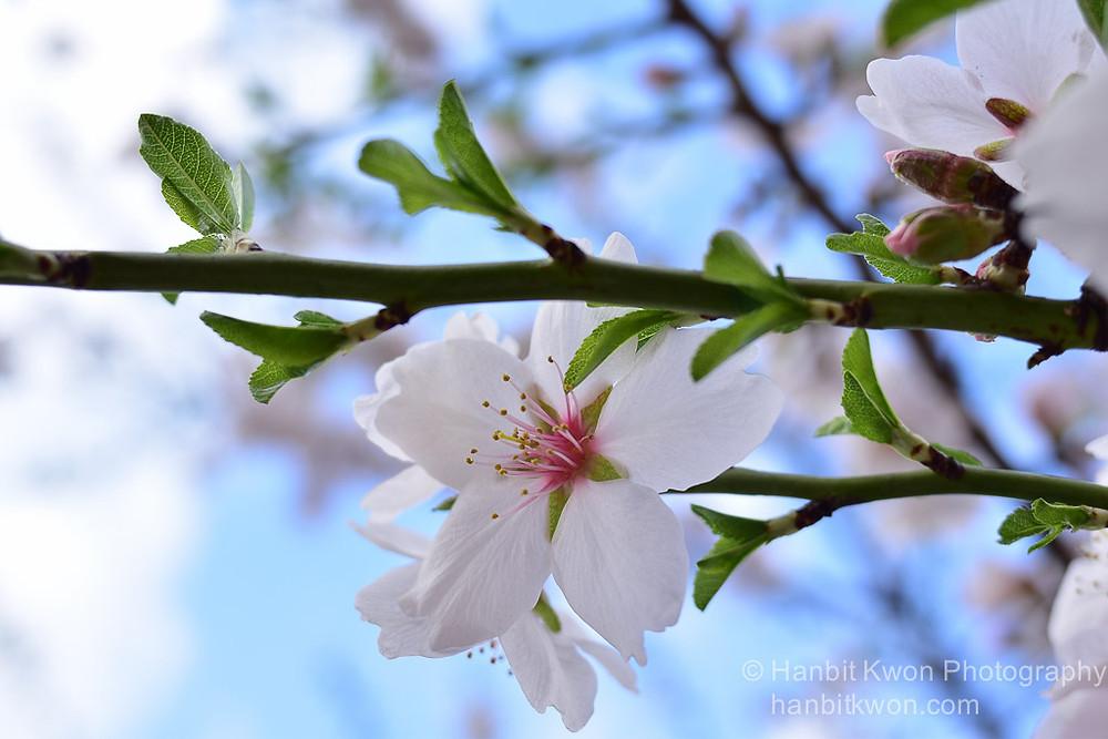Spring_flowers-2.jpg