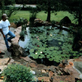 Lilly-pad-pond-2.png