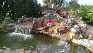 Lilly-pad-pond-4.png