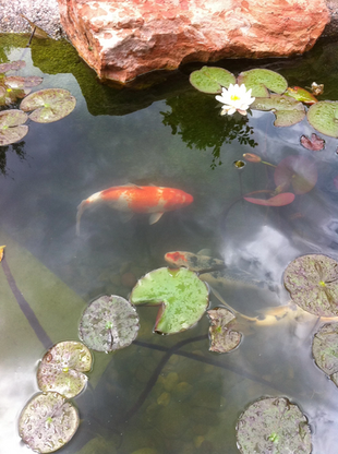 fish-pond-landscaping.png