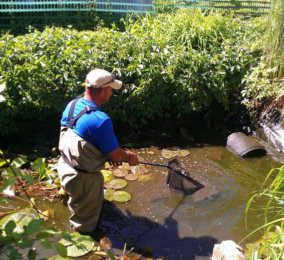 pond-maintenance-services.png