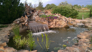 Water-feature-pond.png