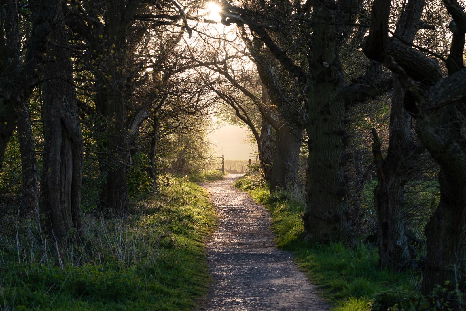 Sunlit Path, Golden Acre Park, Leeds, West Yorkshire