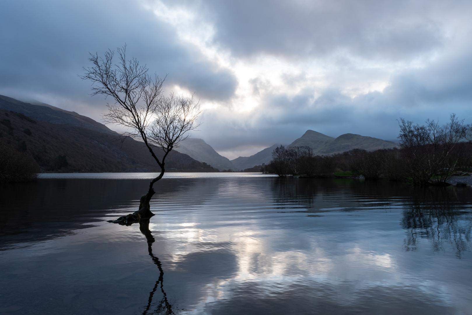 Famous Lone Tree of Llyn Padarn, Snowdonia, Wales