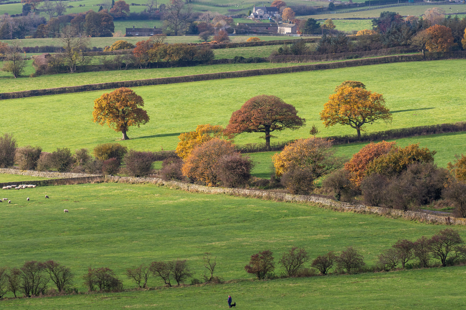Autumn View from Atop Almscliffe Crag, North Yorkshire