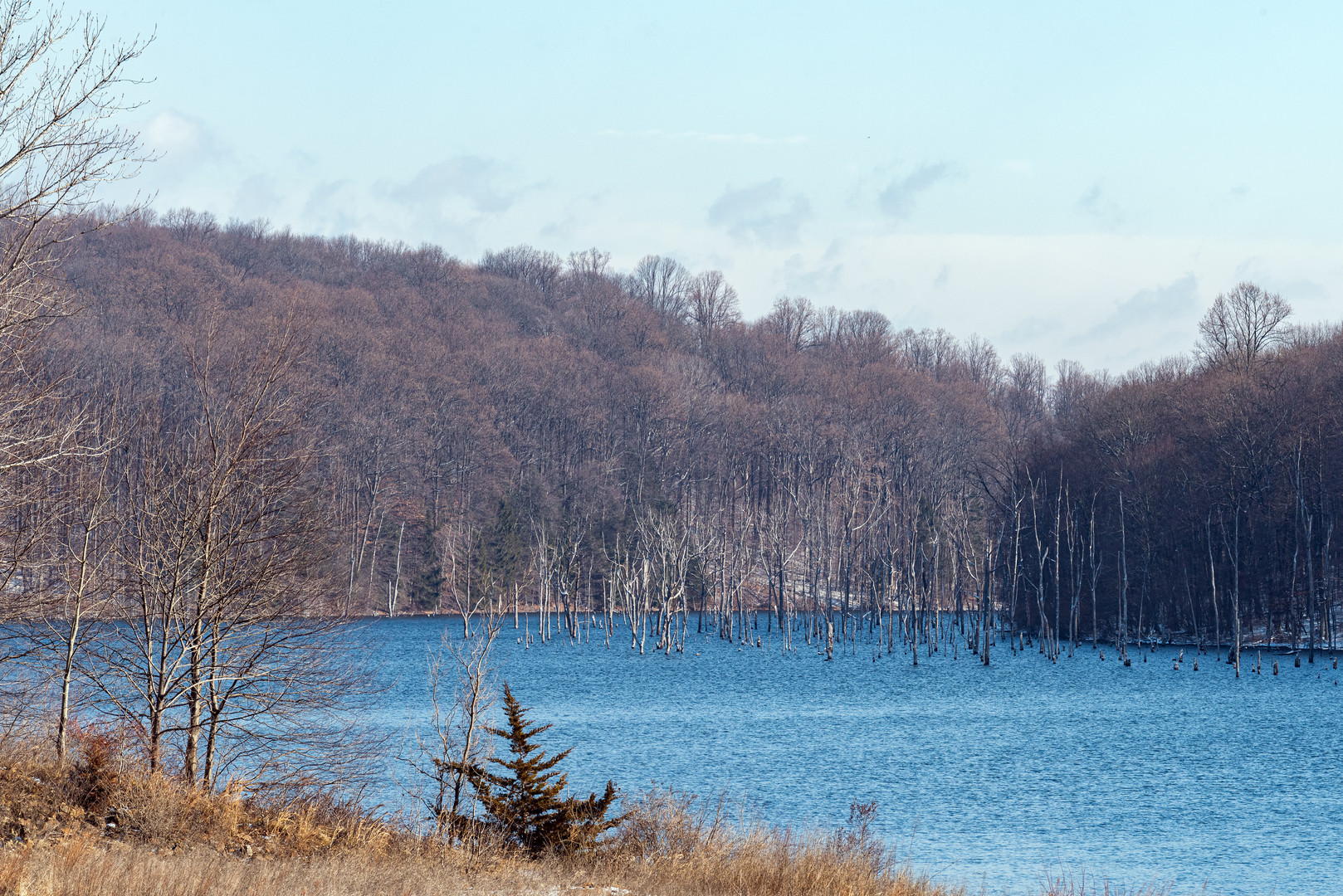 Submerged Trees at Merrill Creek Reservoir, New Jersey