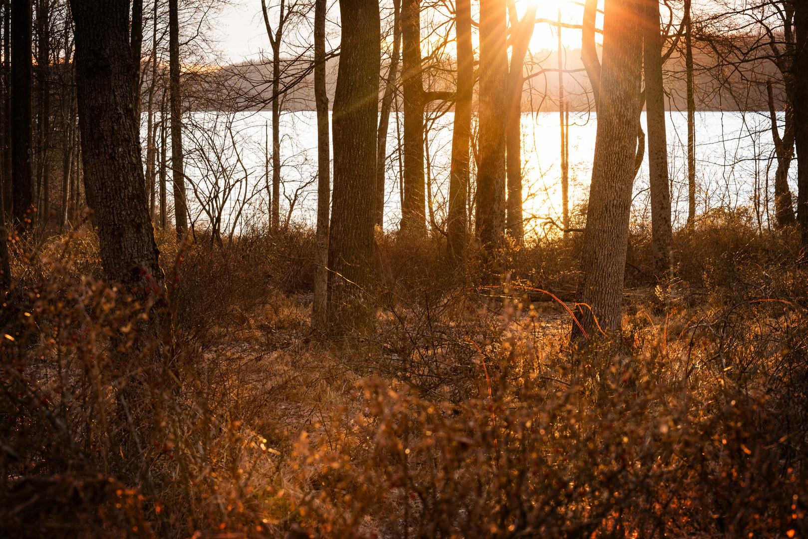 Late Afternoon Sun, Merrill Creek Reservoir, New Jersey