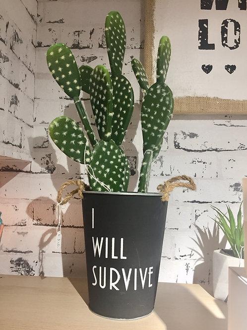 pot I will survive + cactus en mousse