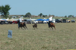 pasture roping 095