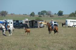 pasture roping 073