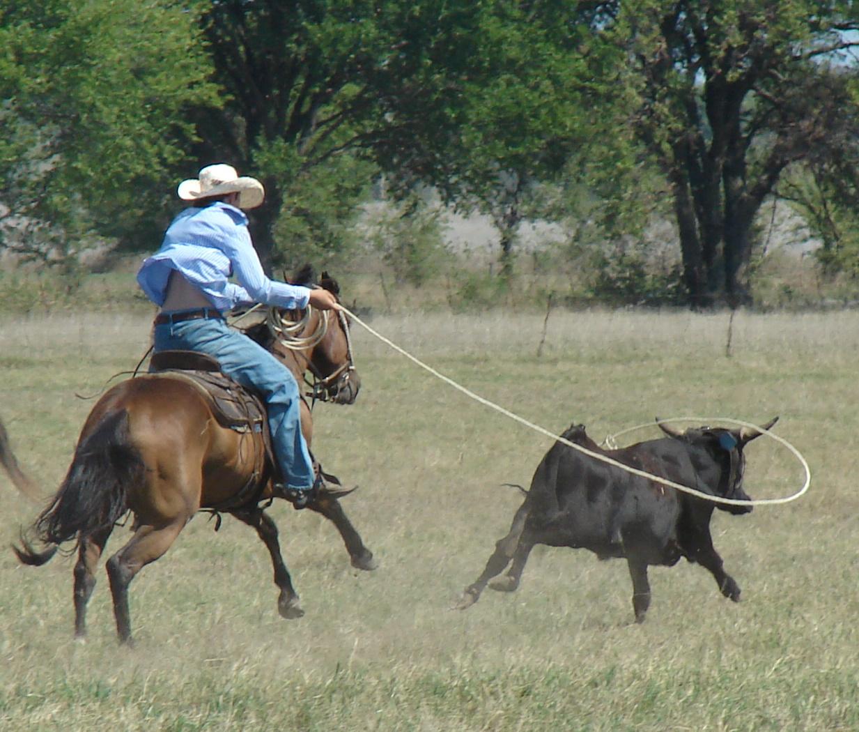 pasture roping 093