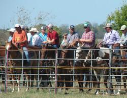 pasture roping 067