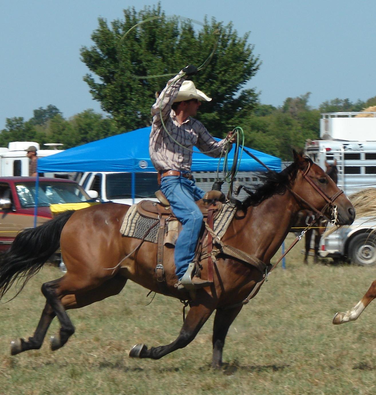 pasture roping 078