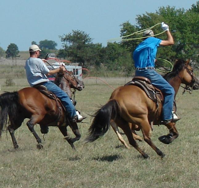 pasture roping 076