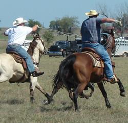 pasture roping 086