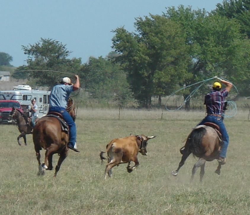 pasture roping 081
