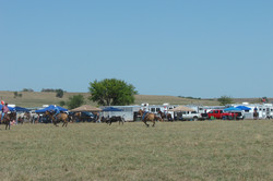 pasture roping 098