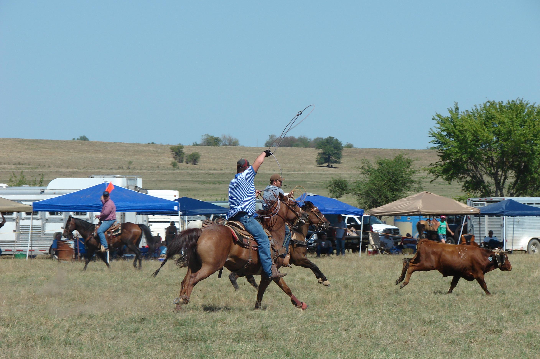 pasture roping 094