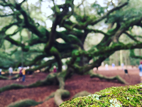 Communications 101: Becoming a 'giving tree'
