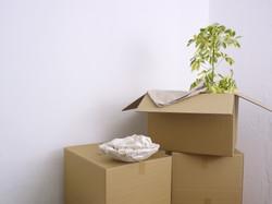 Boxed Plants