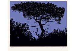 Sur la branche 1 (fond bleu)