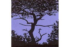 Sur la branche 2 (fond bleu)