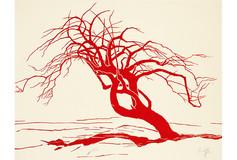 Le sureau rouge
