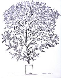Un arbre pour Charlie
