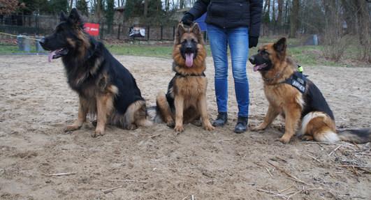 Dante, Roksana, Amber