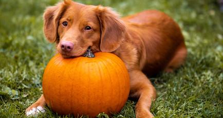 Halloween Safely