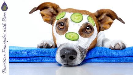 Doggie Detangler, Grooming & More
