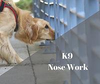 Nose Work