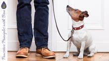 Dog Training?
