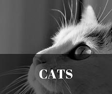 cats essenia oils